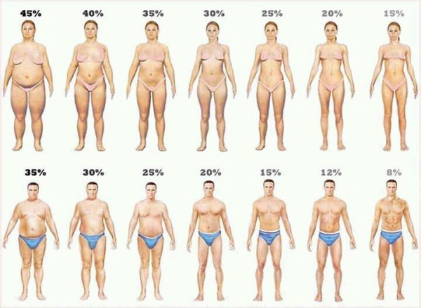body fat percentage cartoons